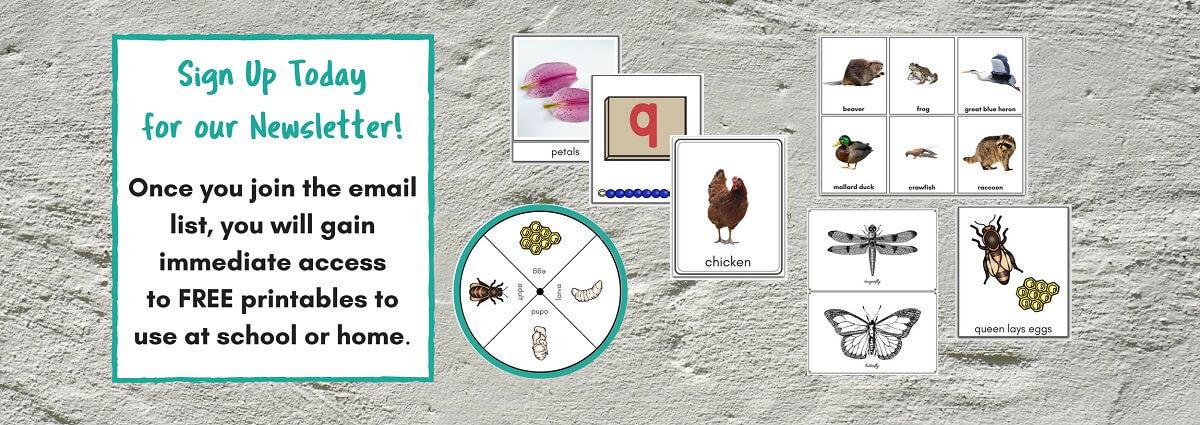 100+ Montessori Practical Life Skills - Mama\'s Happy Hive