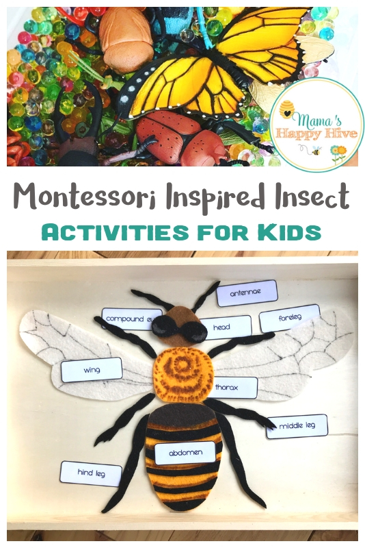 Montessori Inspired Insect Activities for Kids